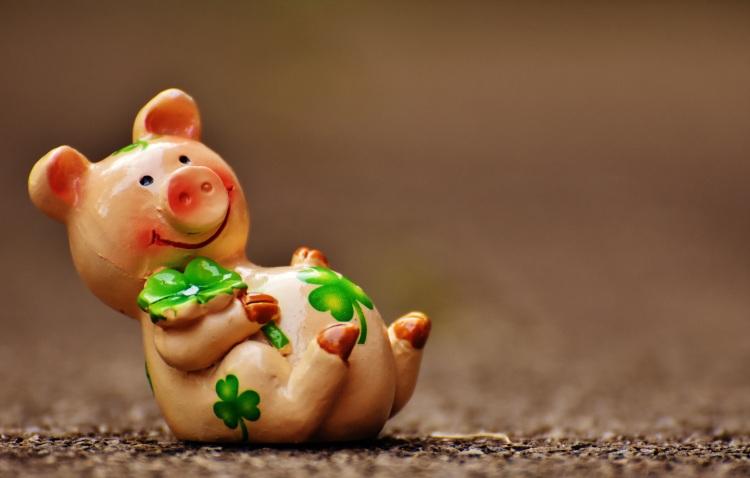 lucky-pig-1690947